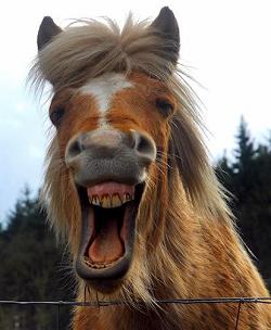 Paardenpraktijk Isabel Van Der Kuijl